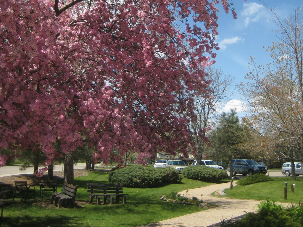 Pink tree benches